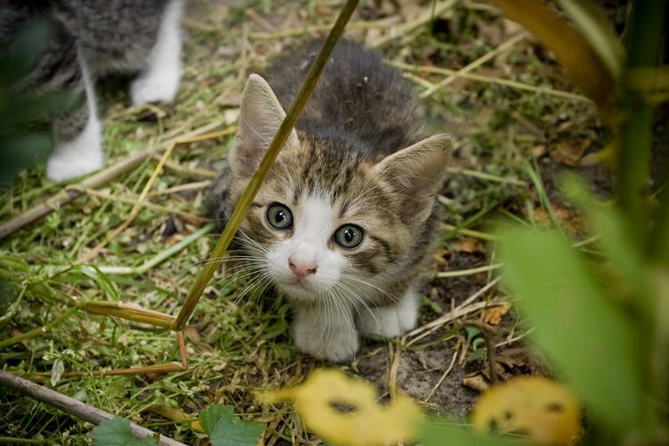 Kotek by wojtar