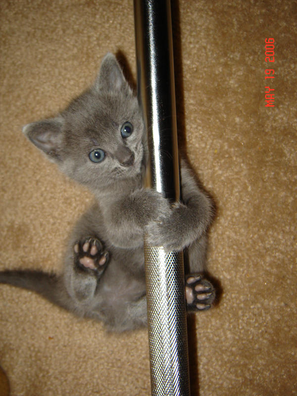 Pole Dancing Kitty by AngelofIncantation