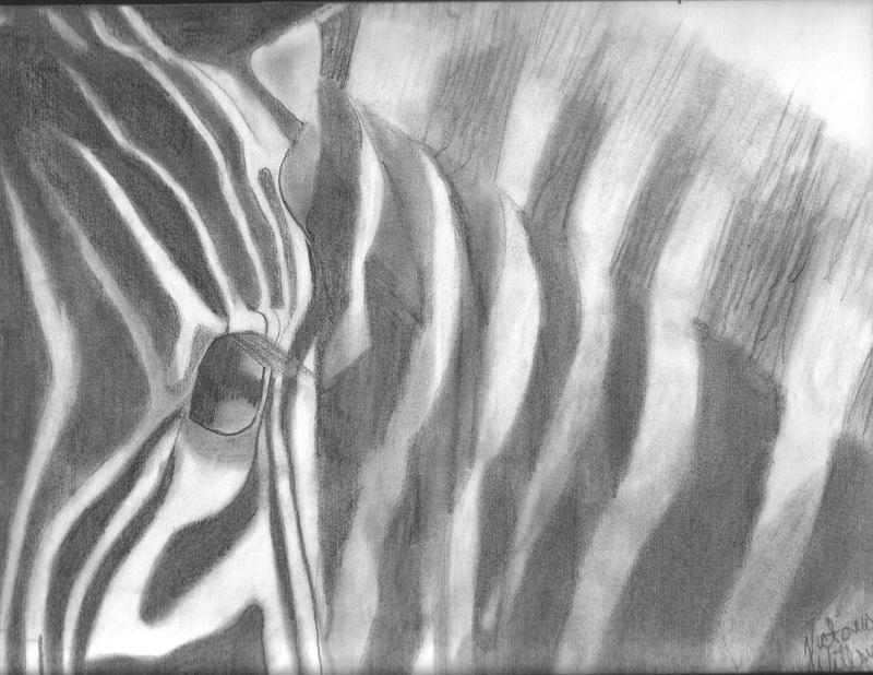 Zebra's Face by Wysper-d
