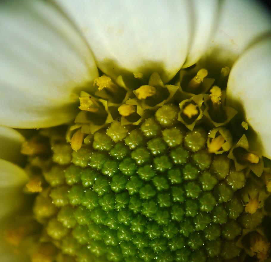 Random Flower I Found On The Floor Macro 2 by kizgoth