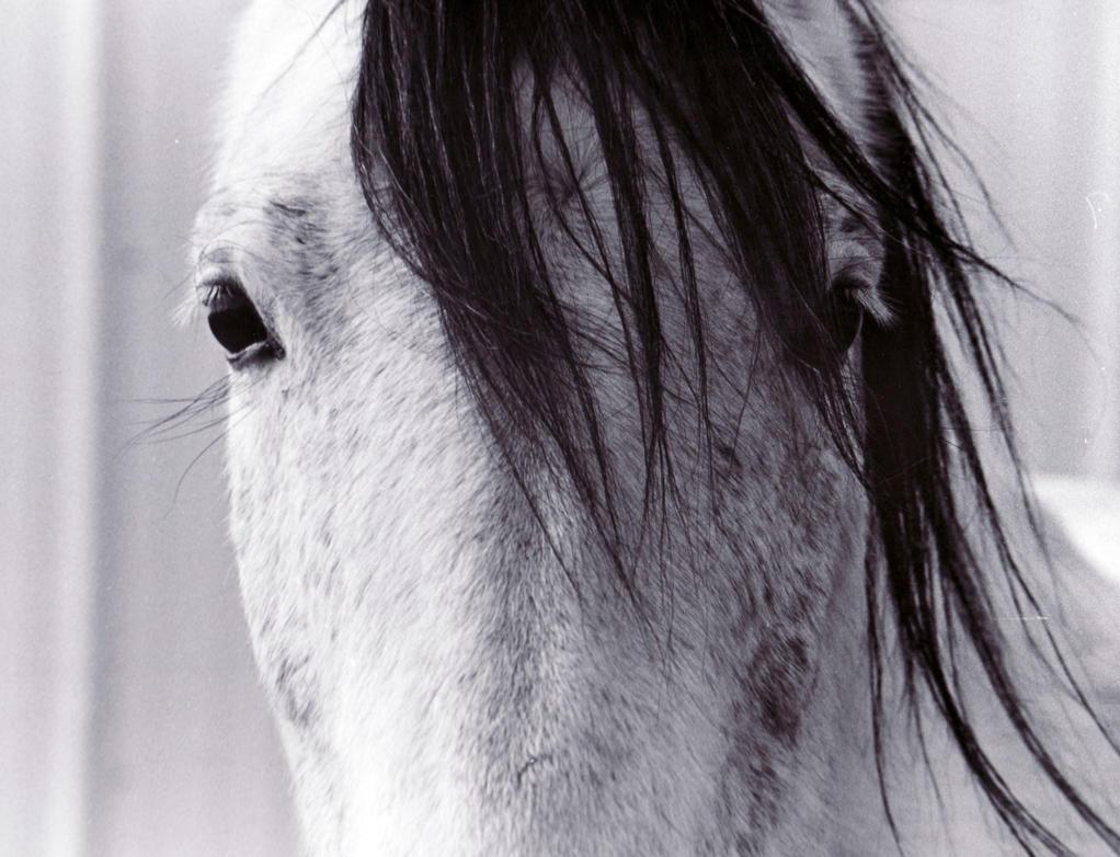 Black horse face close up - photo#32
