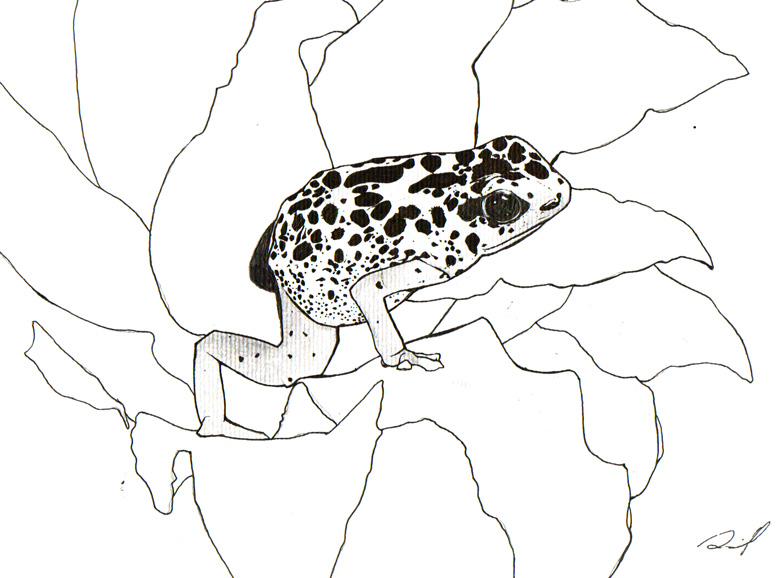 how to draw a poison dart frog
