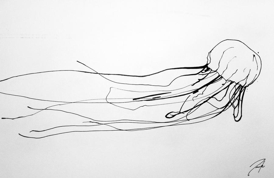 Line Art Jellyfish : Box jellyfish sketch by aaronfrick on deviantart