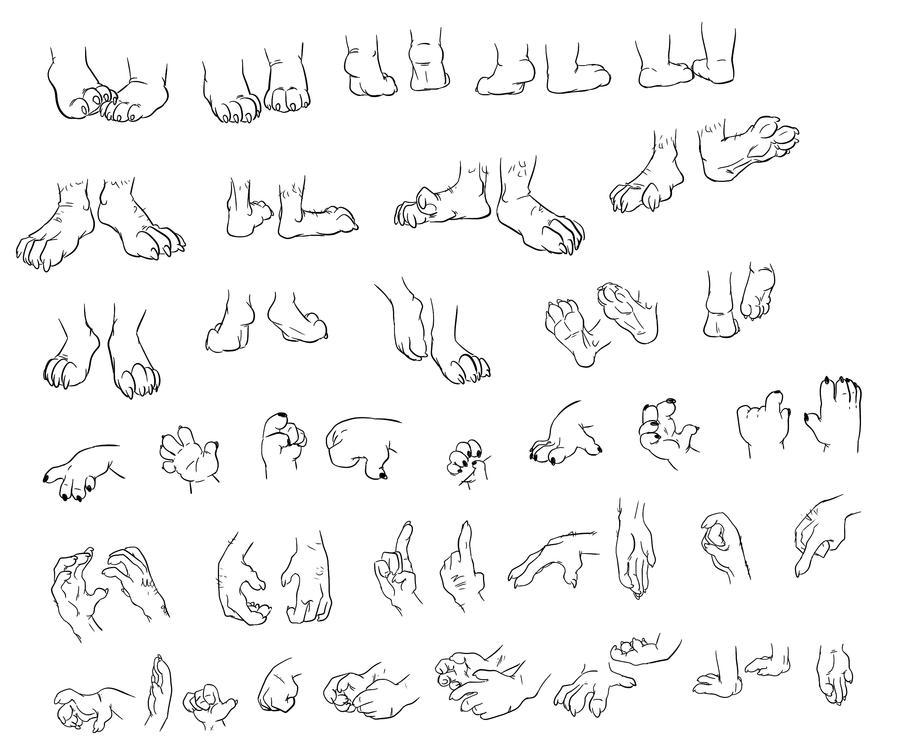 Koala Hands And Feet Feet And Hand Study by Fyuvix