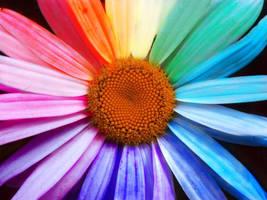 Rainbow Daisy by mariah22