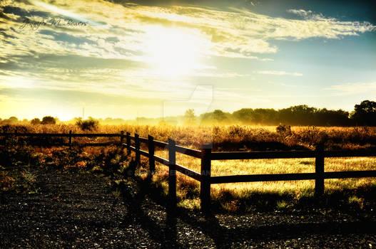 Sunlit field