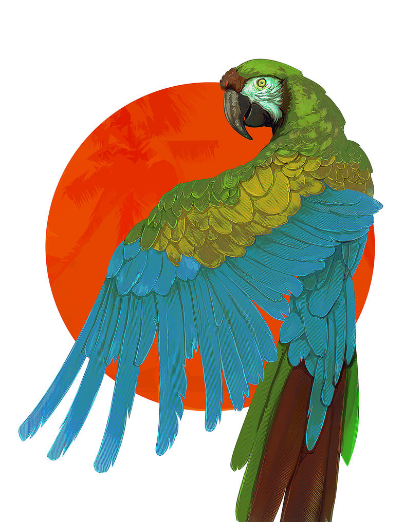 Great Green Macaw by lucirgo