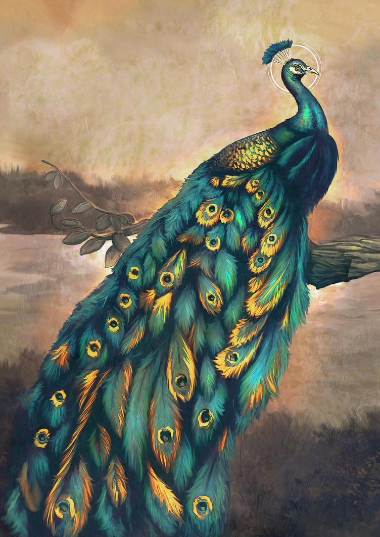 Peacock by lucirgo
