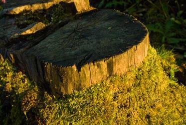 Stump with Moss by Danika-Stock