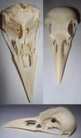 crow skull by RoanSerpentia