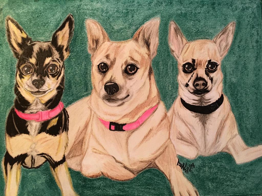 3 Chihuahuas  by roxasroxs