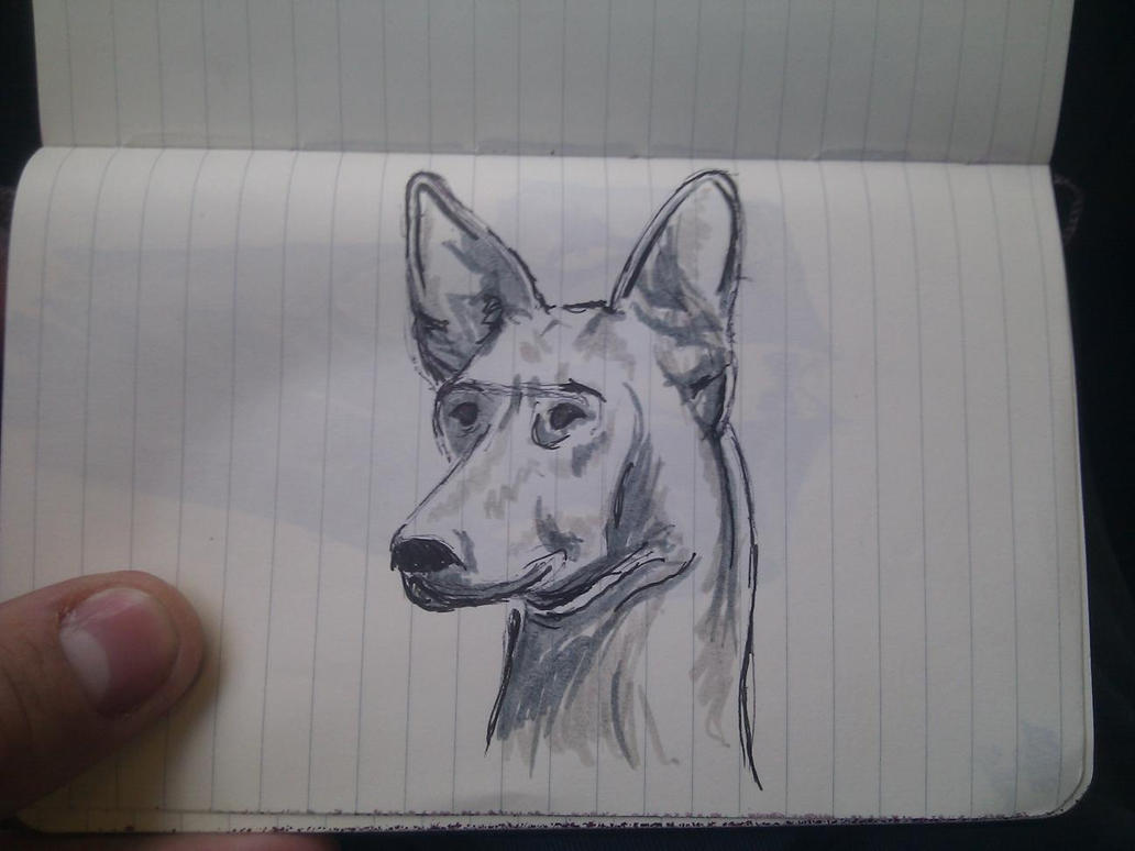 Hound sketch by Jingovimes