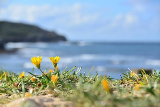 Flower on the shore