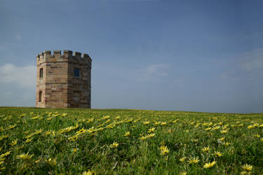 Tower and daisies