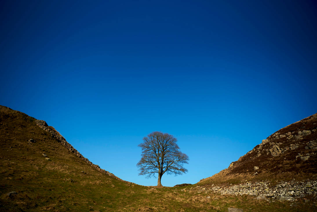 Sycamore Gap by mistersaxon