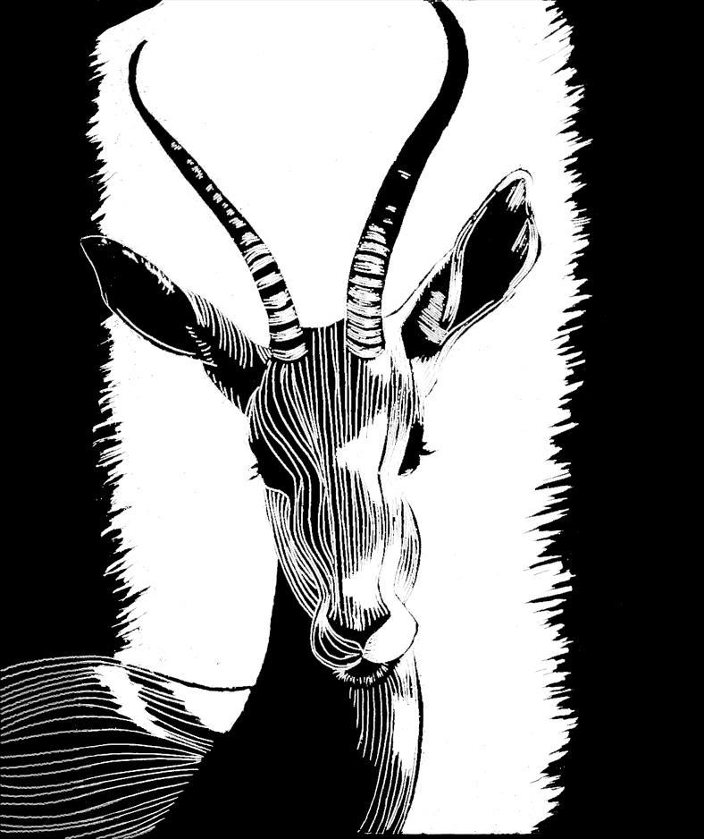 Line Art Animals Drawings : Line art animals gazelle by xxcrimsonstars on deviantart