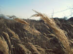 Wind and Natur
