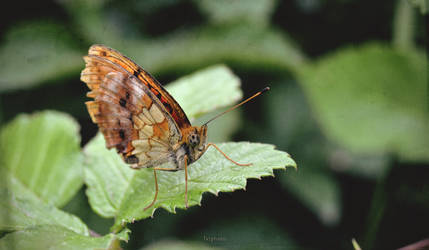 Butterfly effect by Zoroo