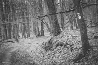 Darkwood by Zoroo