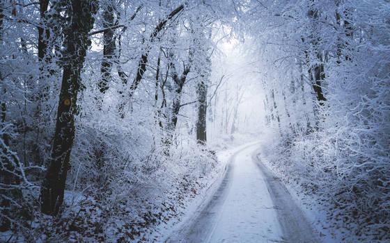 Snow Stroll by Zoroo