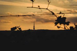Skyline Vineyard by Zoroo