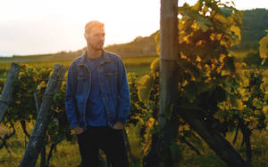 Stroll to Vineyards