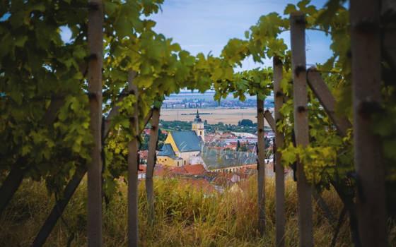 Vineyard's Citadel