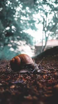 Snail The Traveller