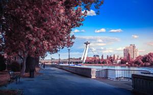 Stroll in Bratislava