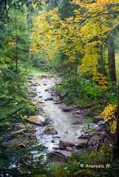 Autumn near me... by aneresia