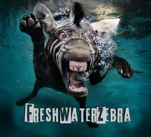 FreshWaterZebra's Profile Picture