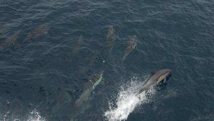 Dolphin - 03 by skippern