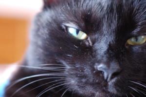 crimsondrgn's Profile Picture