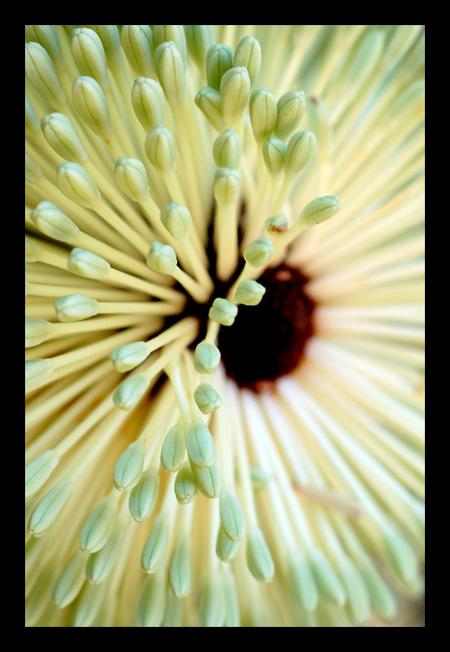 Pastel Focus by crimsondrgn