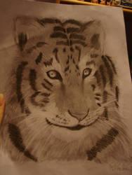Tiger by PatricijaF