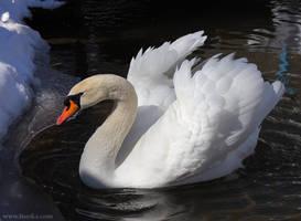 Swan by ines-ka