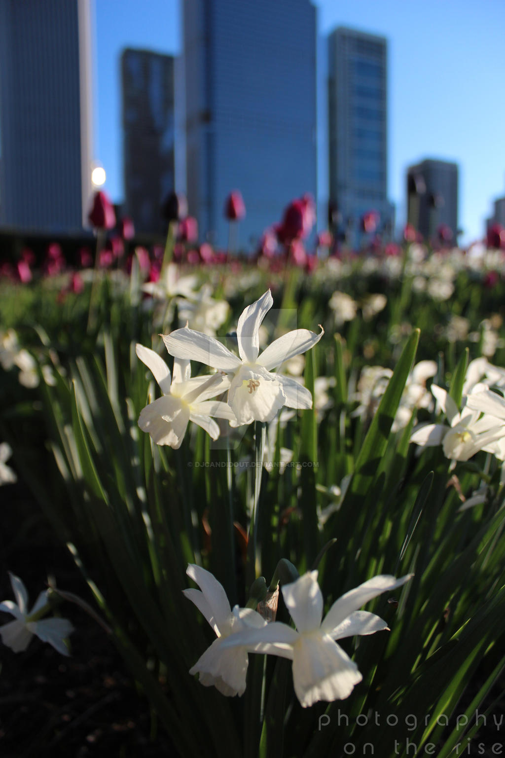 Lurie Garden in the Spring by DJCandiDout
