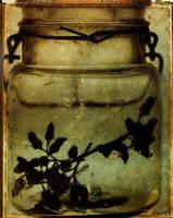 Bottle Study7 by matildamonroe