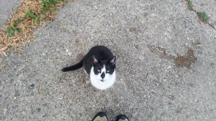 Meet Tubby, my lil Buddy by WingDiamond