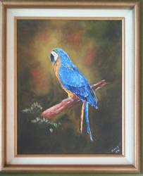 Macaw At Midnight by WingDiamond