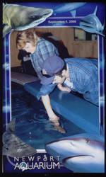 Pettin' Da Sharks by WingDiamond