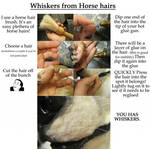 horse hair whiskers application