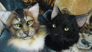 Tabby and Black cat masks together :)