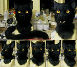Black cat 2 Miasmamorbid!