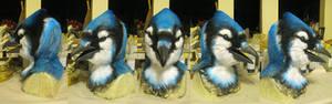 Blue Jay!
