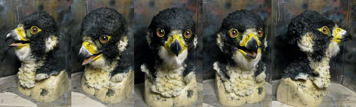 Realistic Perigrine falcon mask! by Crystumes