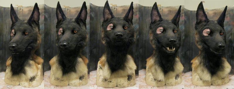 Belgian Malinois Shepherd Dog | Dog Breeds Picture
