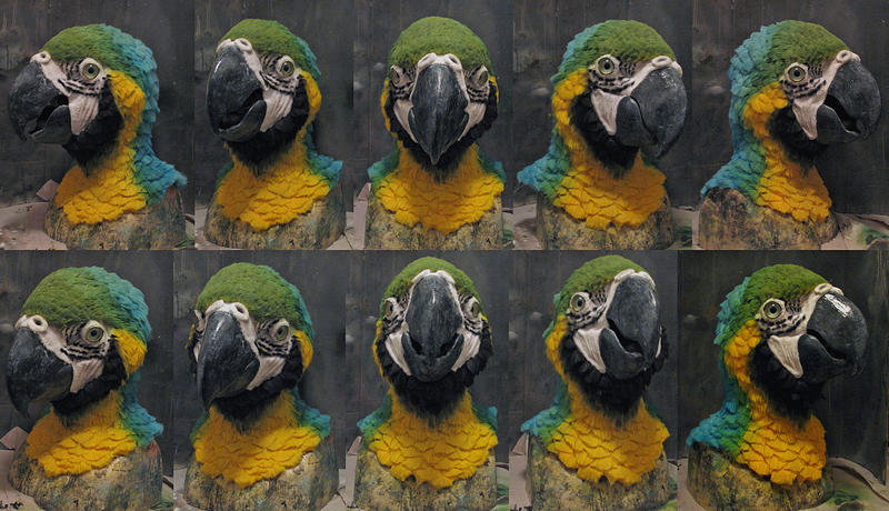 Blue and Gold Macaw by Crystumes