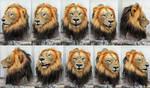 Realistic Lion mask
