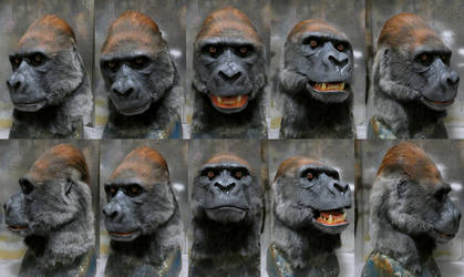 Lowland Silverback Gorilla mask (for sale)